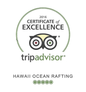 snorkeling with excellent reviews