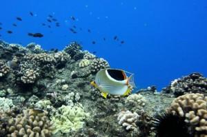 Maui marine life