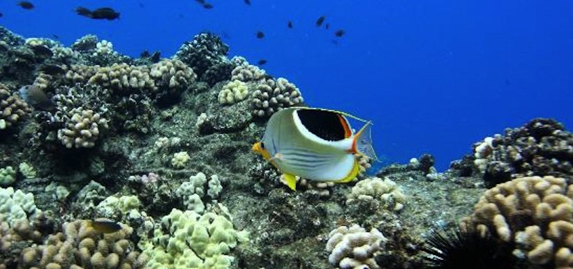 Snorkeling the island of Lanai is a must if you plan to visit maui.