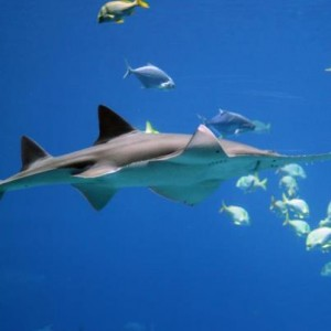 snorkeling from Lahaina
