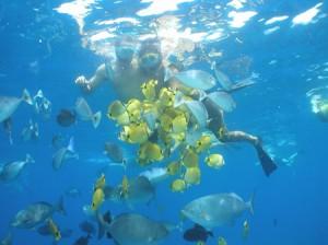 Maui and Lanai snorkeling
