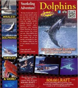 dolphinbro