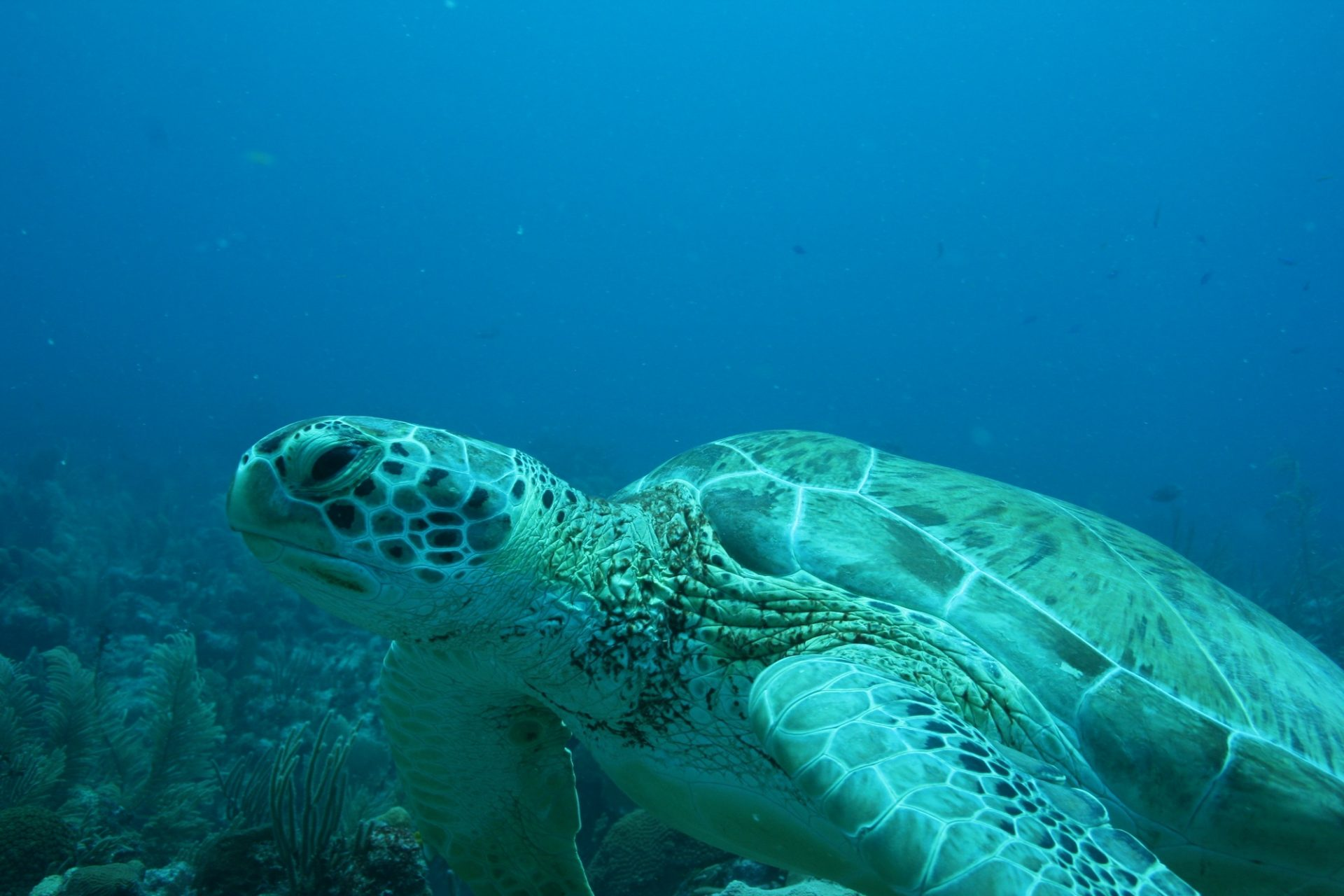 This is what you can expect on one of our Lanai snorkeling tours.