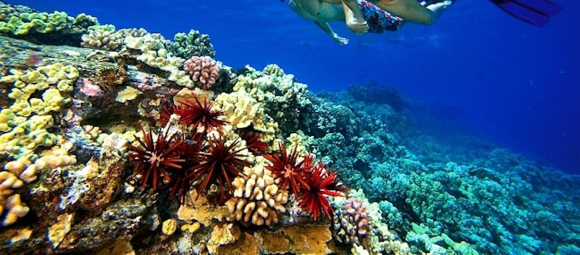 Maui snorkeling tours to the island of Lanai are our specialty.