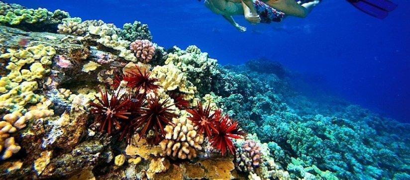 Lanai snorkeling tours