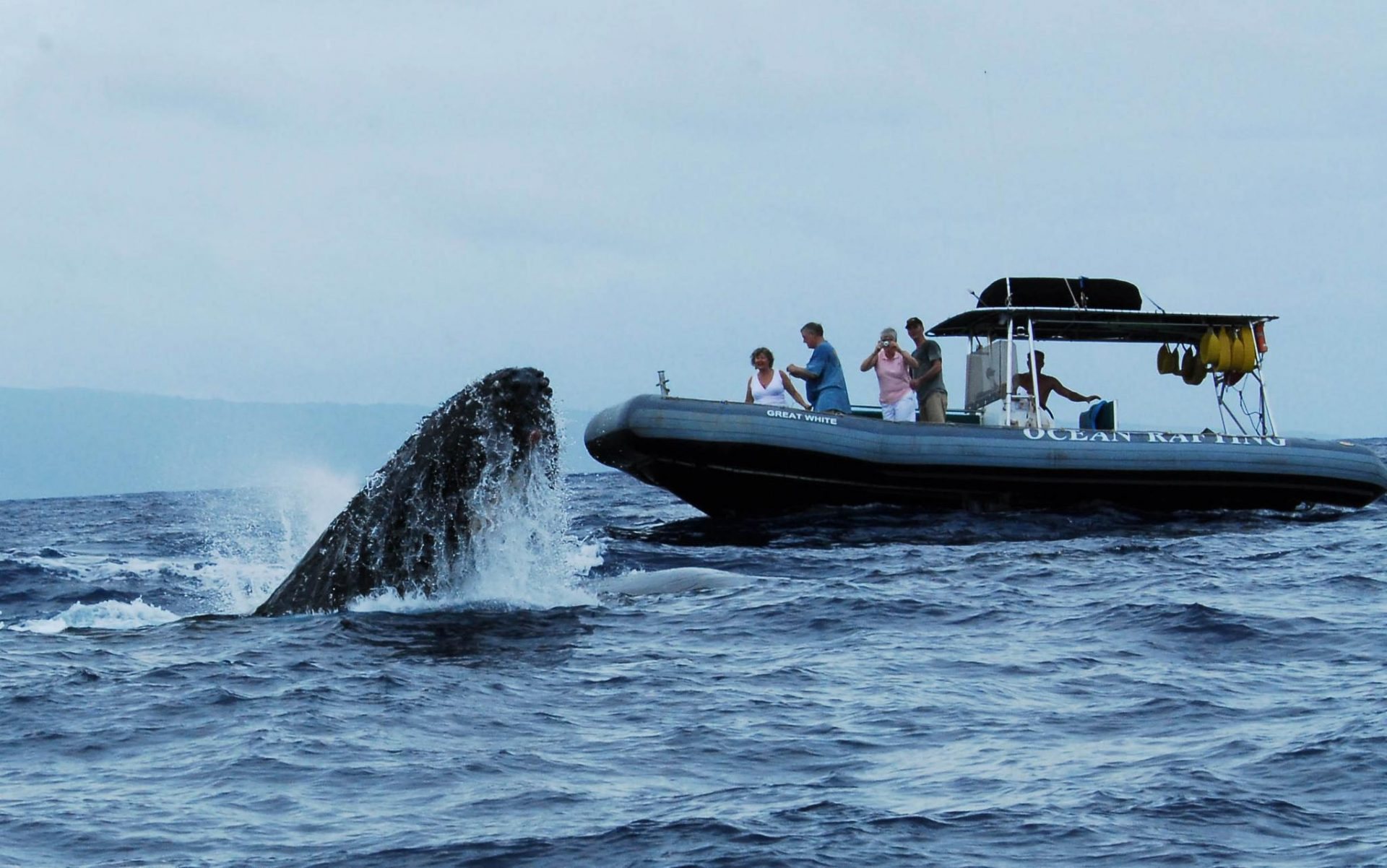 Best Whale Watching Tour In Maui