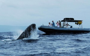maui whale watches