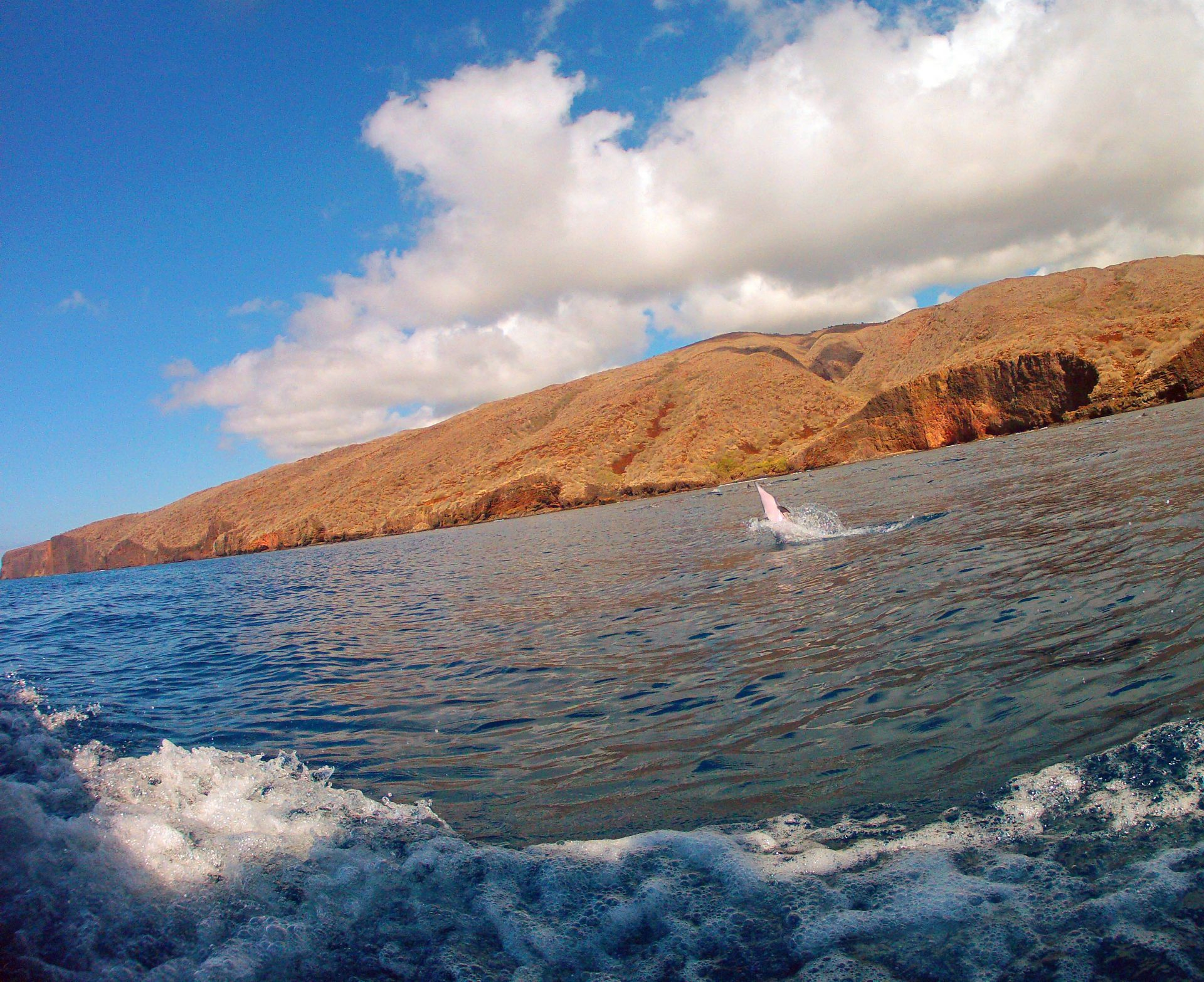 A spinner dolphin around the cliffs of Lanai.