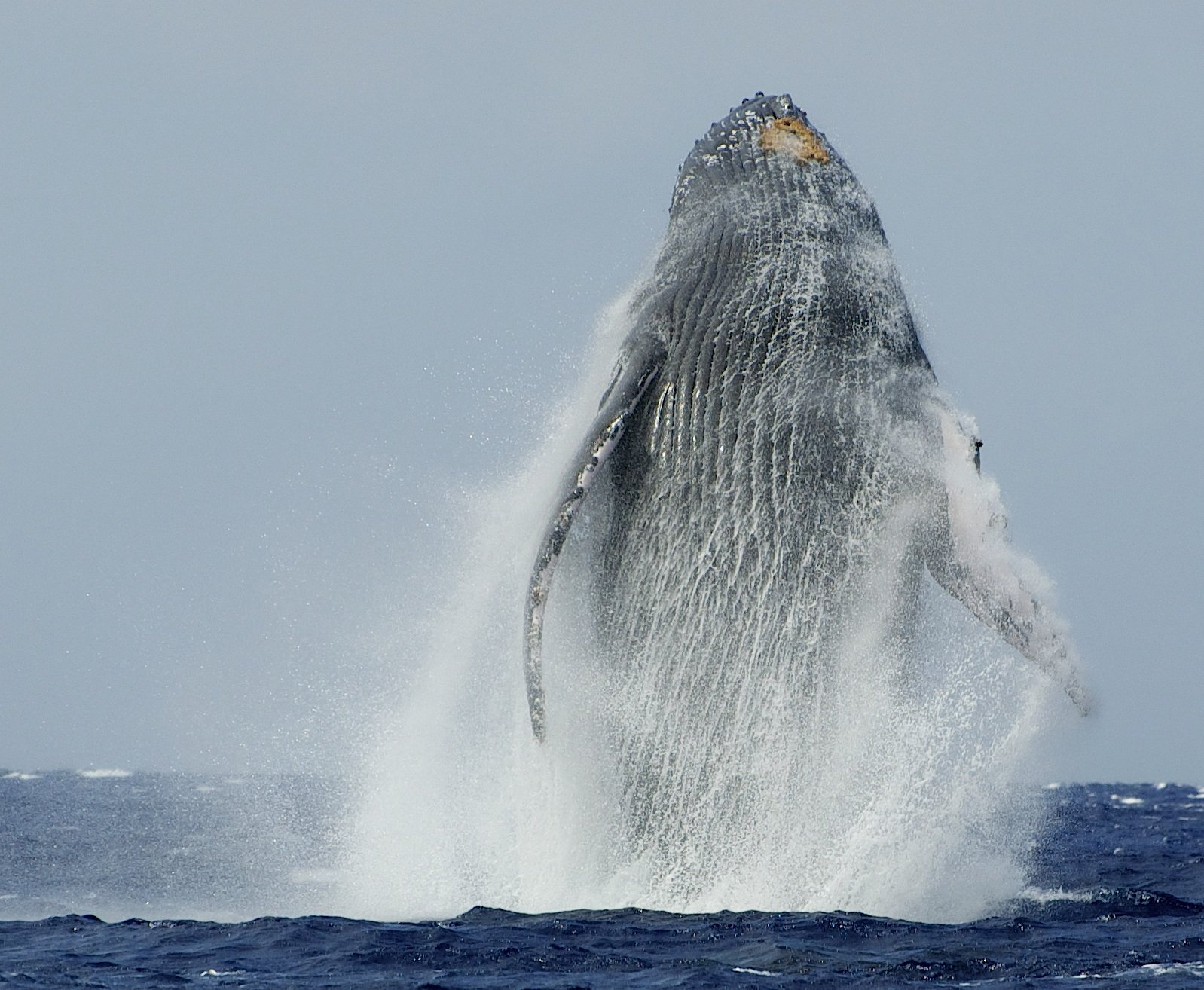 Hop on one of our Maui whale watching tours.