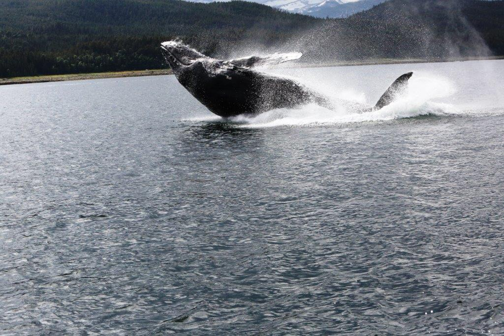 Should you whale watch?