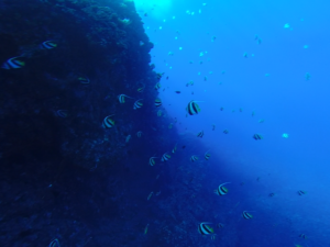snorkeling around Lana'i