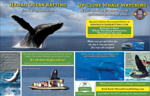 Maui humpback whale watching tours