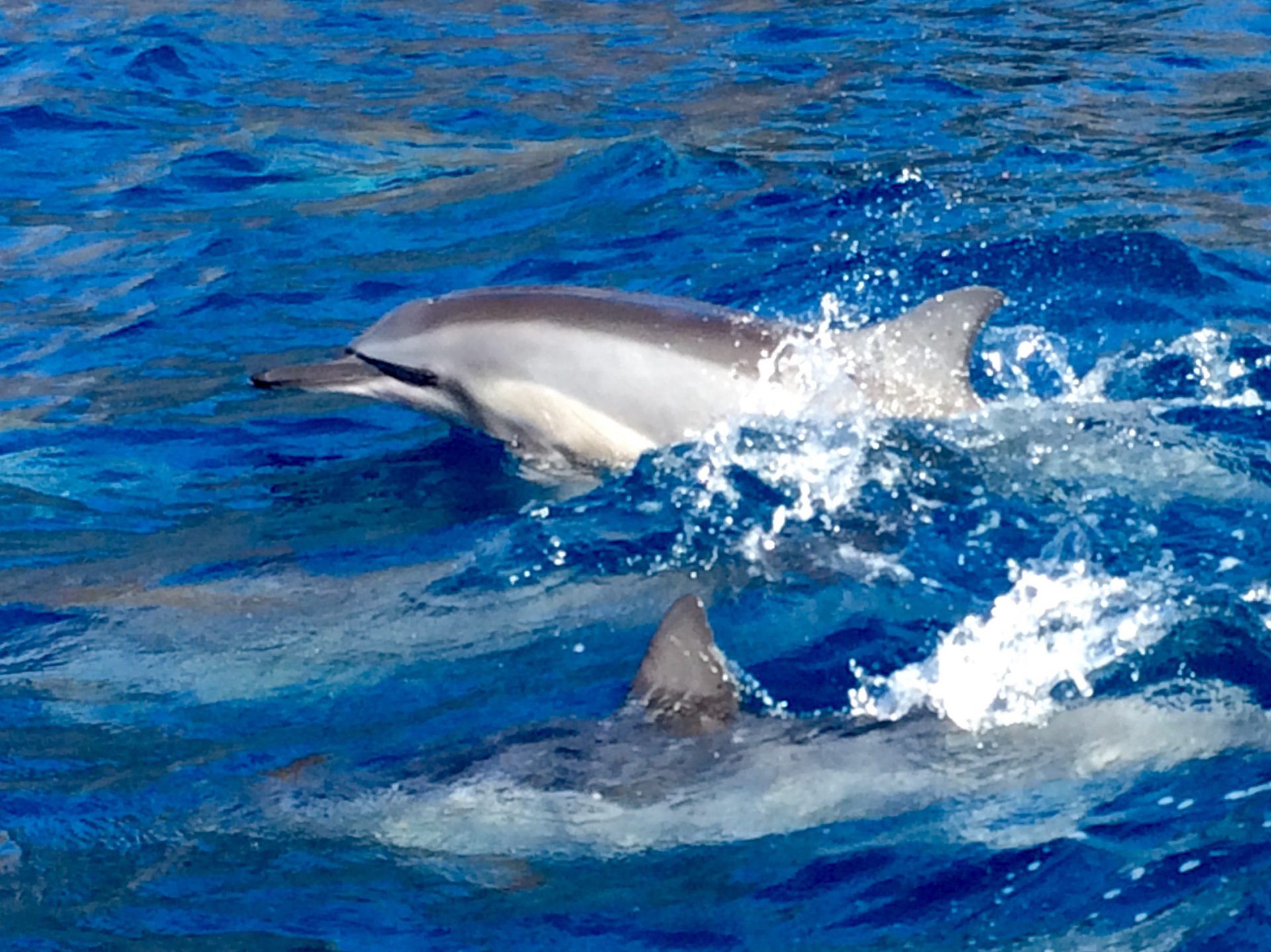 We offer half day Lanai snorkeling tours and seasonal whale watching as well as a full day tour and private charters.