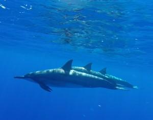 snorkeling trip to Lanai
