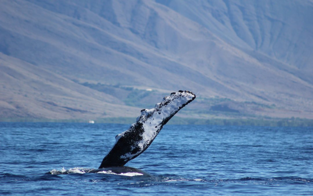We offer seasonal whale watching tours between December and May each year.