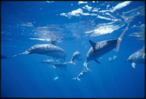 Lanai snorkeling trips with dolphin watching