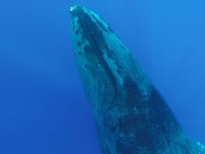 the best maui whale watching tours