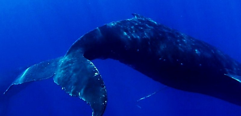 The first whale has been spotted, here are a few things to consider when planning your trip.