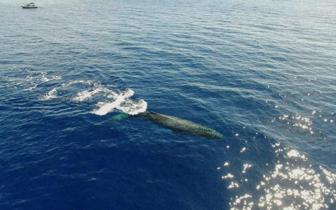 January Whale Watches are Special!